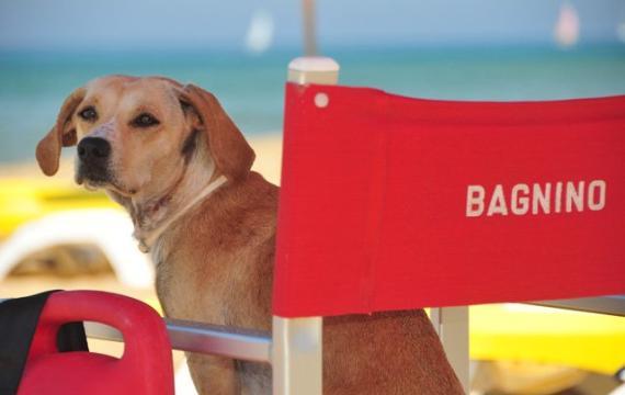 come organizzare le vacanze con gli animali