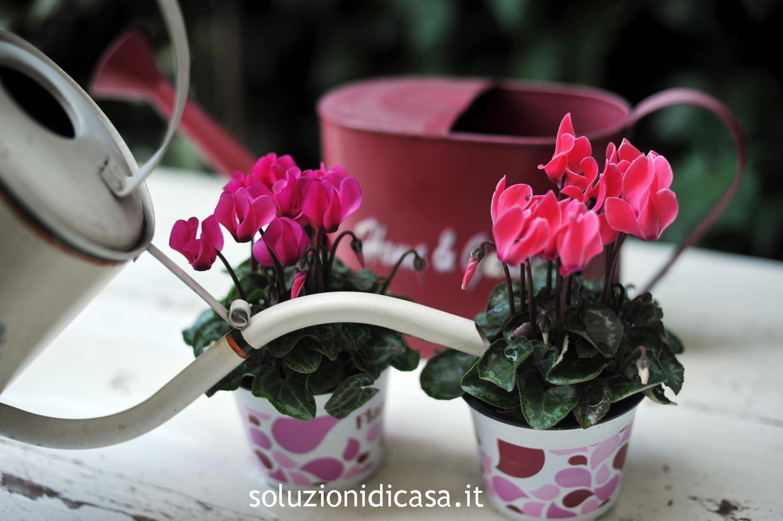 Come disporre i fiori in tanti modi diversi