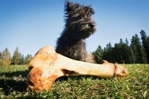 Perché non bisogna dare le ossa ai cani