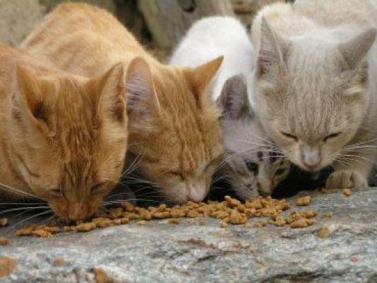 Come aiutare i gatti randagi