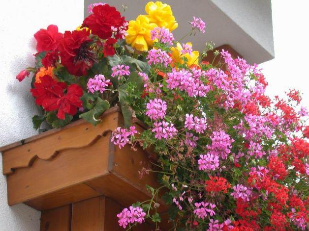 Come piantare i fiori in vaso