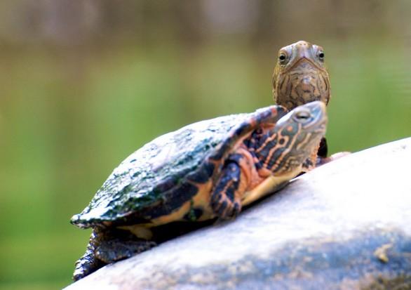 Come prendersi cura di una tartaruga