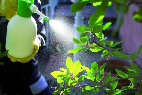 Come e quando vaporizzare le piante