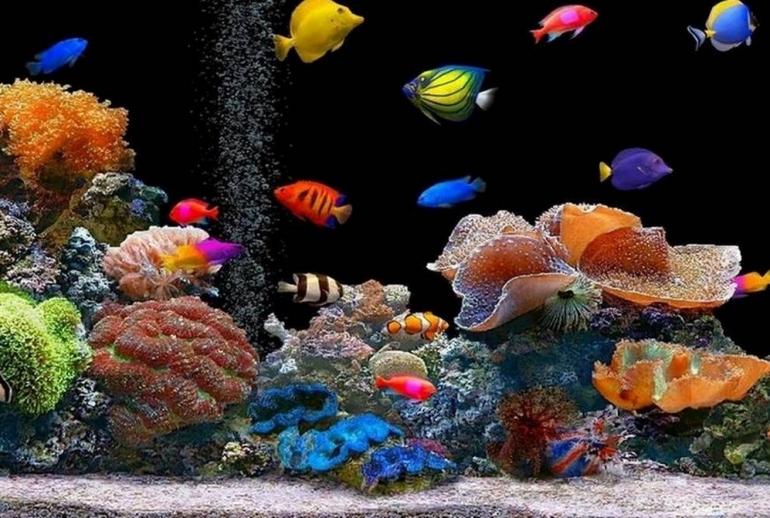 Come prendersi cura dei pesci esotici