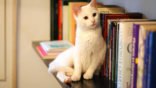 Come organizzare una casa a prova di gatto