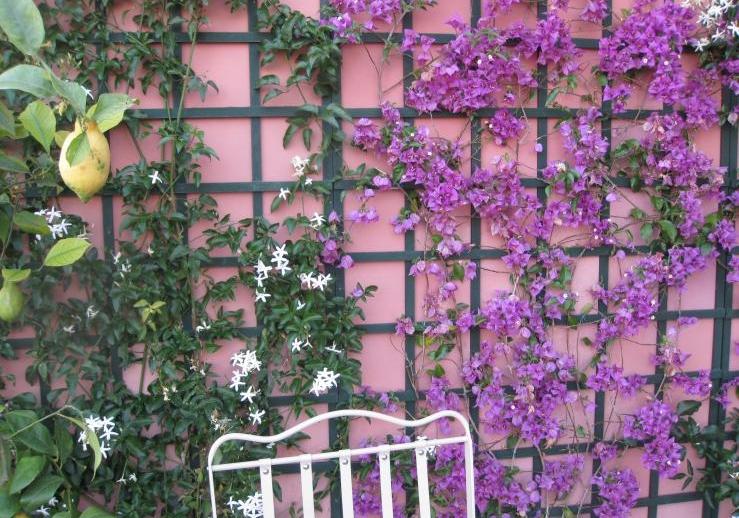 Come scegliere le piante rampicanti