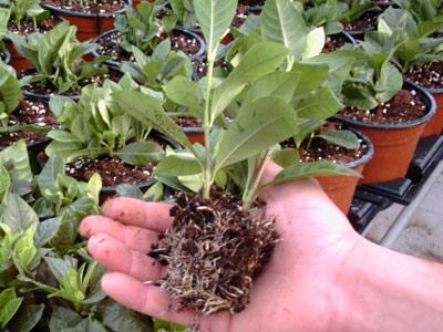 Tecniche di riproduzione delle piante in vaso