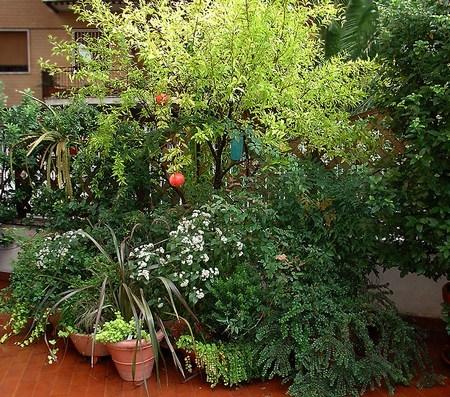Come riconoscere ed eliminare i parassiti delle piante