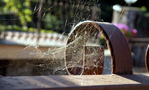 come eliminare ragni e ragnatele