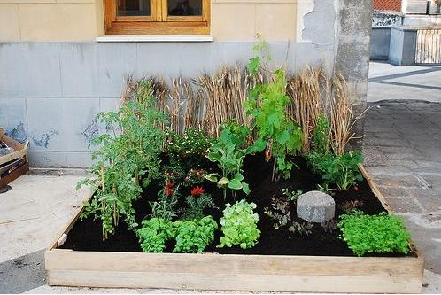 come creare un orto bio