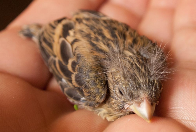 uccellino caduto dal nido
