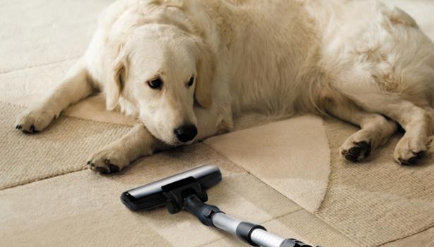animali domestici e pulizie