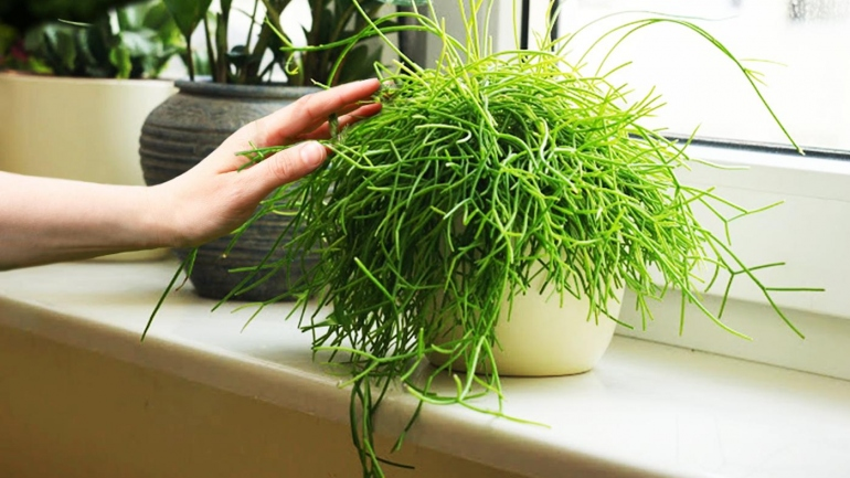 piante antistress