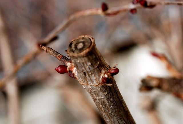 Il riposo vegetativo delle piante