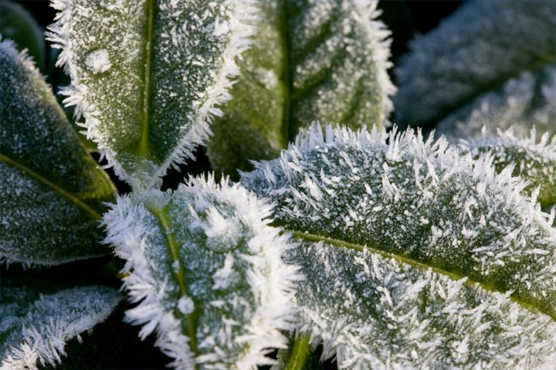 come curare le piante in inverno